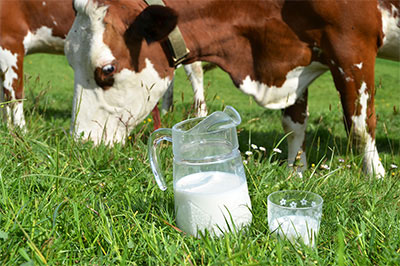 Raw milk from happy, grass-fed cows